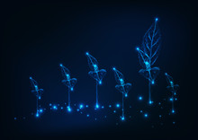 Farm Field With New Sprouts. Agriculture Concept. Glowing Low Poly Wireframe Background On Dark Blue.