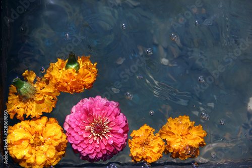 Wall Murals Floral flower in water