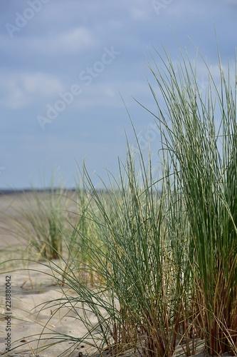 Keuken foto achterwand Noordzee Nordsee Strand Düne Gras
