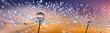 2 Pusteblumen in Nahaufnahme mit Tautropfen