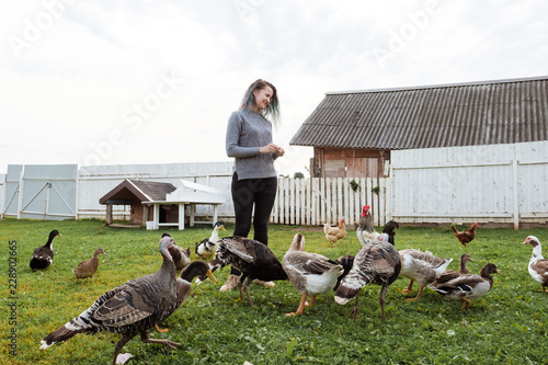 Photo A young girl feeds domestic birds, ducks, hens, geese, turkeys in the yard of a rural house