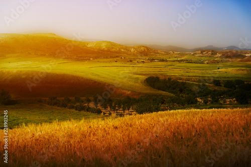 Fotobehang Landschap Cultivated grains and landscape.