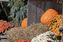 Pumpkins On Display, Autumn Sunshine, Thanksgiving, Happy, Hay, Nature.