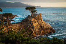 Lone Cypress Tree In Carmel, California