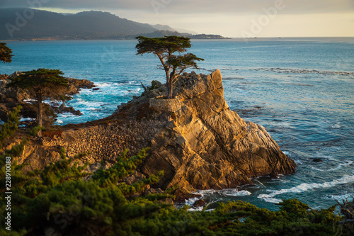 Fototapeta Lone Cypress Tree in Carmel, California