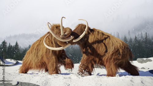 Fototapeta woolly mammoth bulls fighting, prehistoric ice age mammals in snow covered lands