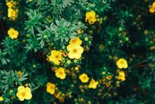 Garden Yellow Flowers Background