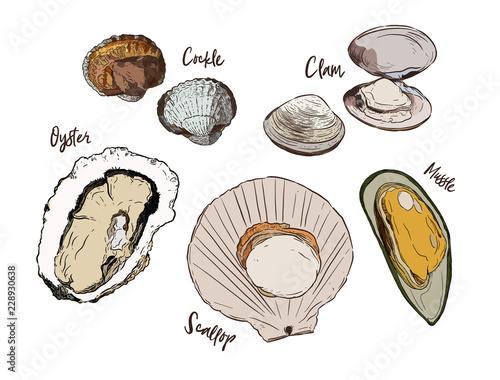 Vászonkép Shell, Hand draw sketch vector. Seafood set.