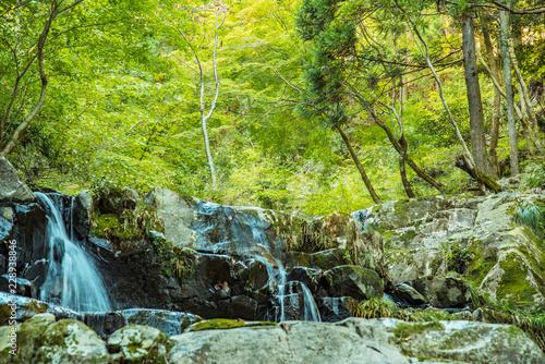 Tuinposter Canyon 自然林・渓流の始まり