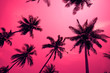 canvas print picture - Coconut palm trees - Tropical summer breeze holiday, Color fun tone