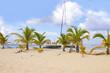 Cozumel, Mexico, Boat, Palm, Beach