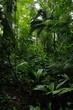 Regenwald bei Boca Tapata in Costa Rica