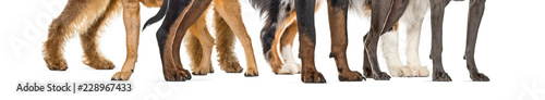 Foto dog paws, in front of white background