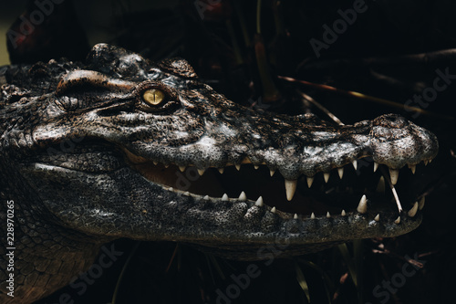 Poster de jardin Crocodile The crocodile is opening its mouth at the crocodile farm in Thailand Zoo. Amphibian fierce eyes In wate