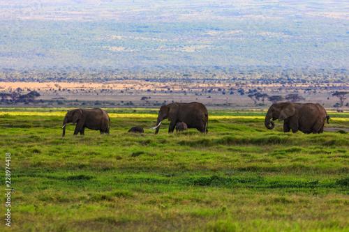 Fotomural  African elephants on the masai mara kenya