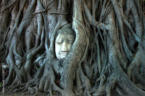head of buddha trapped in tree roots in Ayutthaya, Thailand