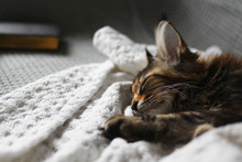 Young Cat Sleeping On A White Blanket On A Sofa With A Cup Of Coffee. Hygge Concept.