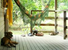 Dog Sleeping On Front Porch Un...