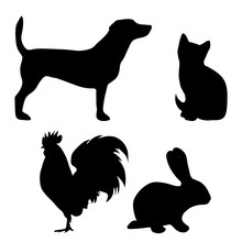 Vector Silhouette Of Farm Animal On White Background.
