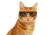 Closeup portrait of funny ginger cat wearing eyeglasses isolated on white