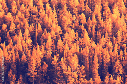 Foto op Plexiglas Crimson autumn forest landscape / yellow forest, trees and leaves October landscape in the park