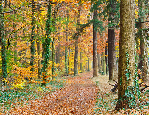 Foto op Canvas Weg in bos Pathway in the autumn forest