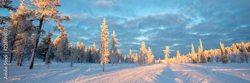 Foto op Aluminium Blauw Snowy panoramic landscape, frozen trees in winter in Saariselka, Lapland, Finland