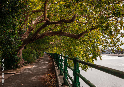 Fotografie, Obraz  Autumn view of the Thames Path, somewhere in Fulham, London, UK.