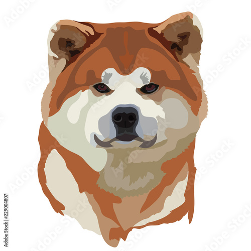 Photo Portrait of standing in profile Akita Inu dog, vector colorful illustration isol