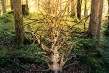 Fallen Tree Near Lake Eibsee, ...