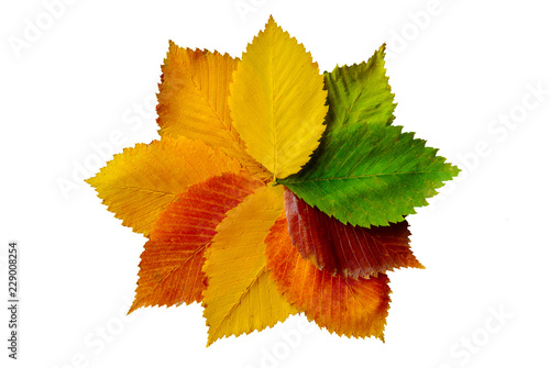 Colorful autumn leaves composition isolated on white
