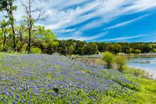 Beautiful Bluebonnets Along A ...