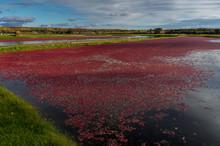 Cranberry Mach In Fall Red Ber...