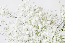 Background With Tiny White Flo...