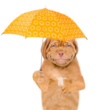 Smiling Puppy With Umbrella. Isolated On White Background