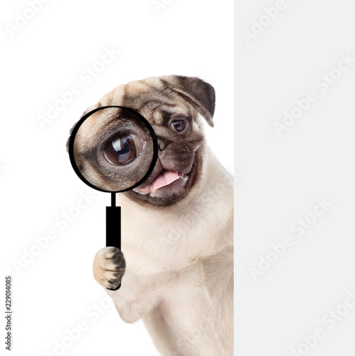 Fototapeta Puppy looks through a magnifying lens