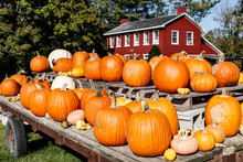 Fall And Autumn Halloween Scene With Pumpkins And Gourds For Sale And A Barn Colored House I