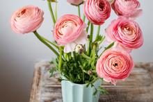 Pink Ranunculus Flowers.