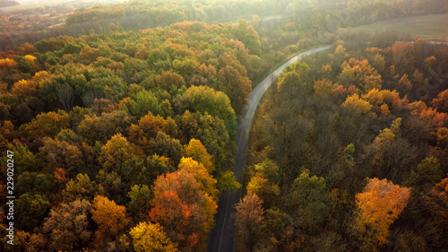 Deurstickers Luchtfoto Autumn forest drone aerial shot, Overhead view of foliage trees and road