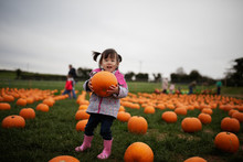 Toddler Girl Picking Pumpkin I...