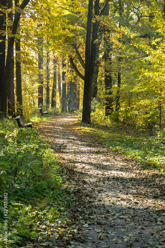 Foto op Plexiglas Grijze traf. Autumn landscape. Pathway in the autumn park