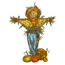 Rustic Fun Scarecrow And Ripe Pumpkins. Color. Engraving Style. Vector Illustration.