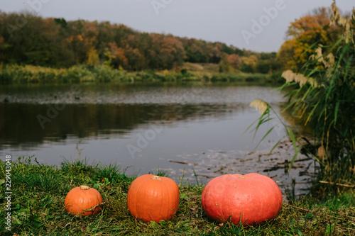 Fotografía  orange pumpkins in nature