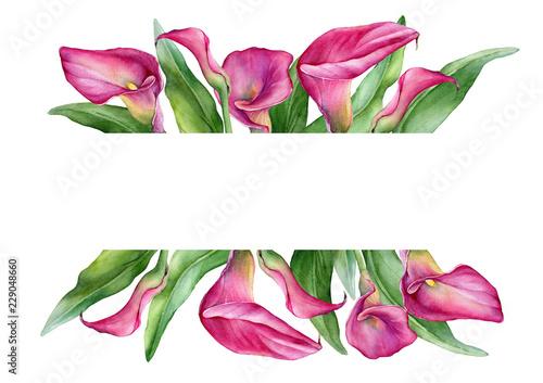Photo Banner with a pink calla lily Zantedeschia rehmannii flower