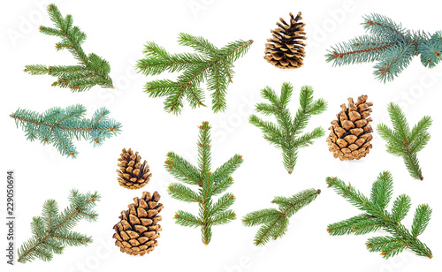 Fotomural Fir branches and cones isolated on a white background