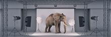 Photo Studio With Elephant. 3d Rendering