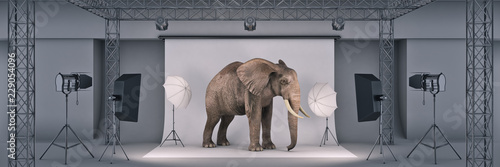 Fototapeta photo studio with elephant. 3d rendering obraz