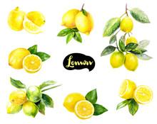 Lemon Fruits Watercolor Set Hand Draw Illustration.