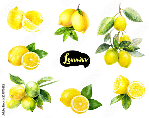 Lemon fruits watercolor set hand draw illustration. Poster Mural XXL