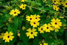 Beautiful Flowers On The Bushe...